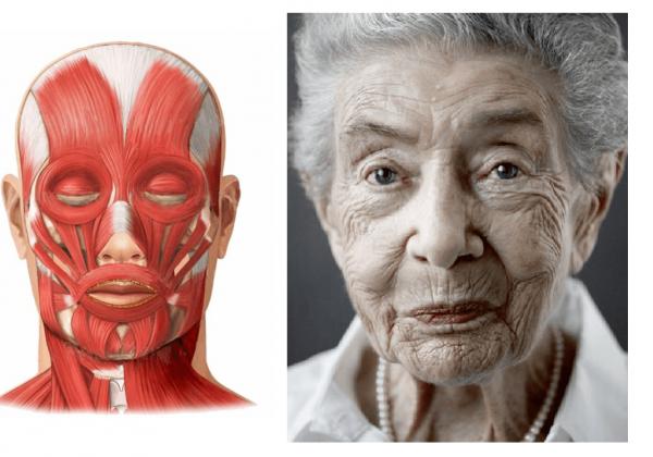 Мышцы лица и лицо старой женщины