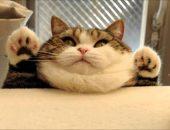 Котик с двойным подбородком
