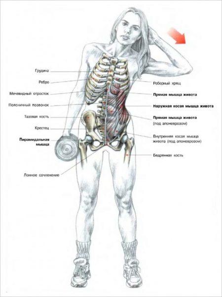 Схема мышц, задействованных при наклонах в сторону с гантелью