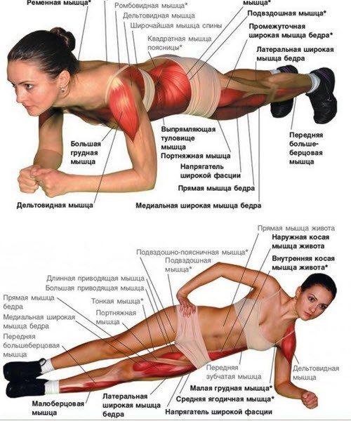 Описание работы мышц при упражнениях планка