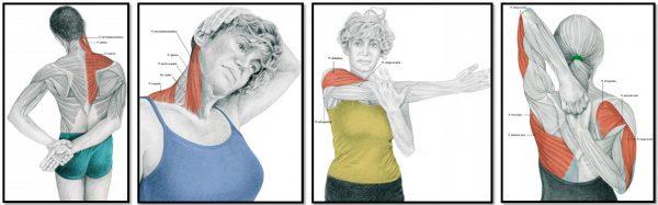 Растяжка мышц рук (иллюстрация к упражнениям 2, 1, 3, 4)