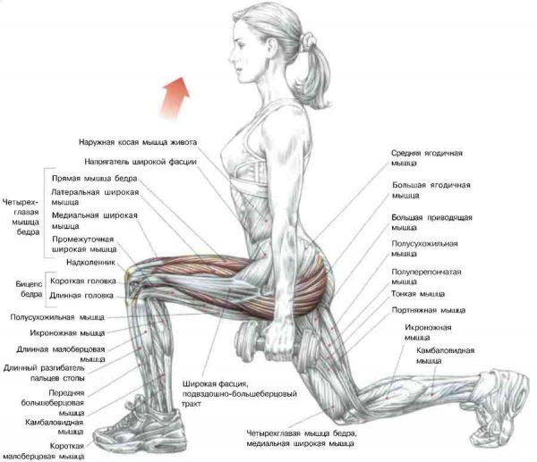 Схема: мышцы, работающие при упражнении выпады