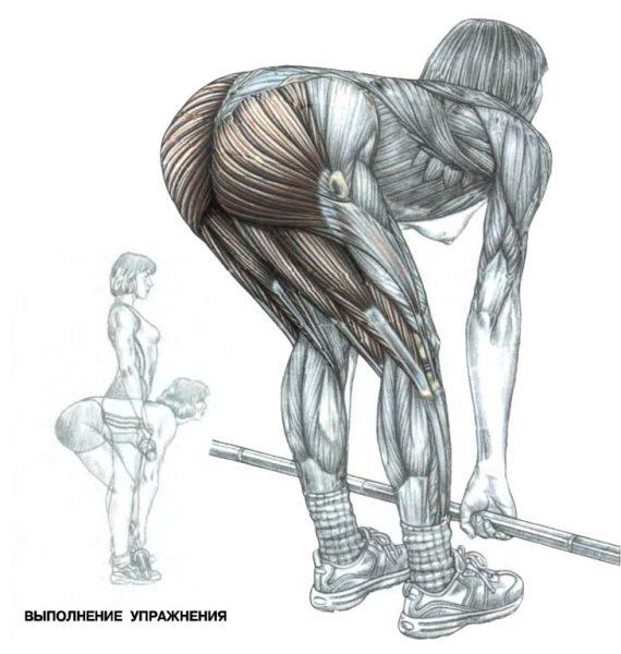 Схема: работа мышц при тяге штанги