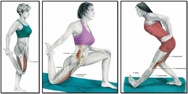 Упражнения для растяжки мышц ног (иллюстрация к упражнениям 5, 6, 7)