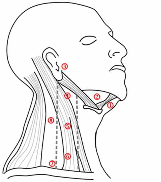 Лимфатические узлы на лице и шее