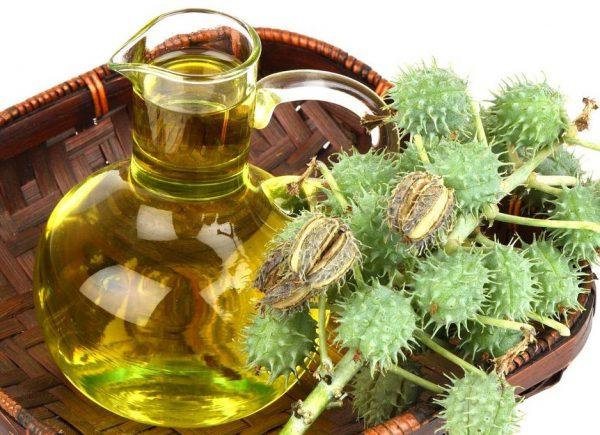 Масло клещевины в прозрачной ёмкости и растение
