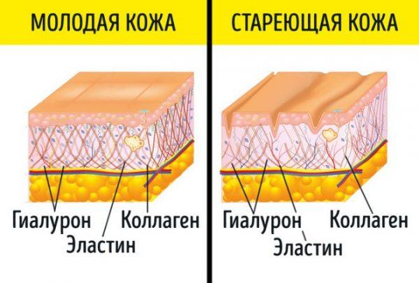 Различия между молодой и стареющей кожей