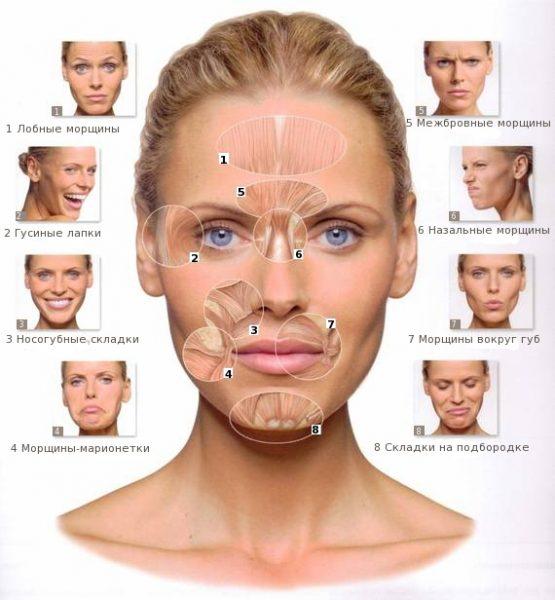 Выражения лица, закладывающие мимические морщины